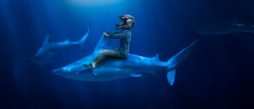11 x 14 Jimi shark