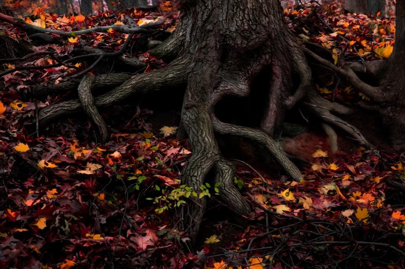 heart tree final